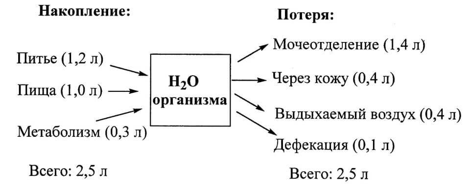 Водный обмен в организме